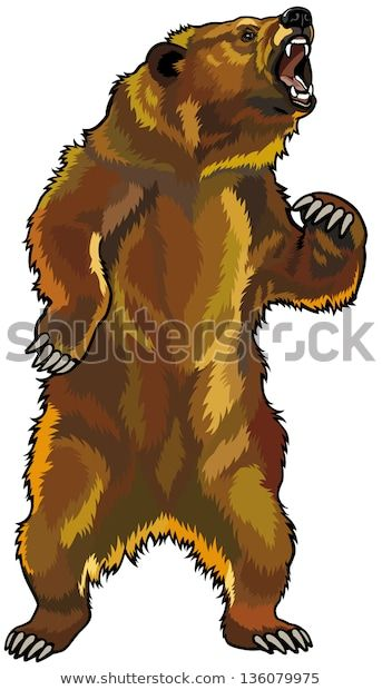 Find Grizzly Bearrearing Angry Posefront View Illustration ...