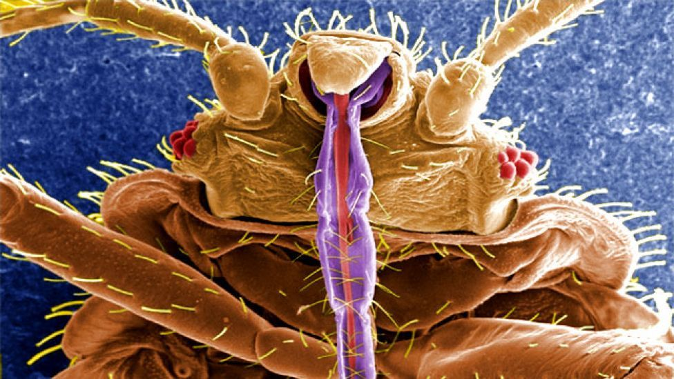 Science (With images) Bed bugs
