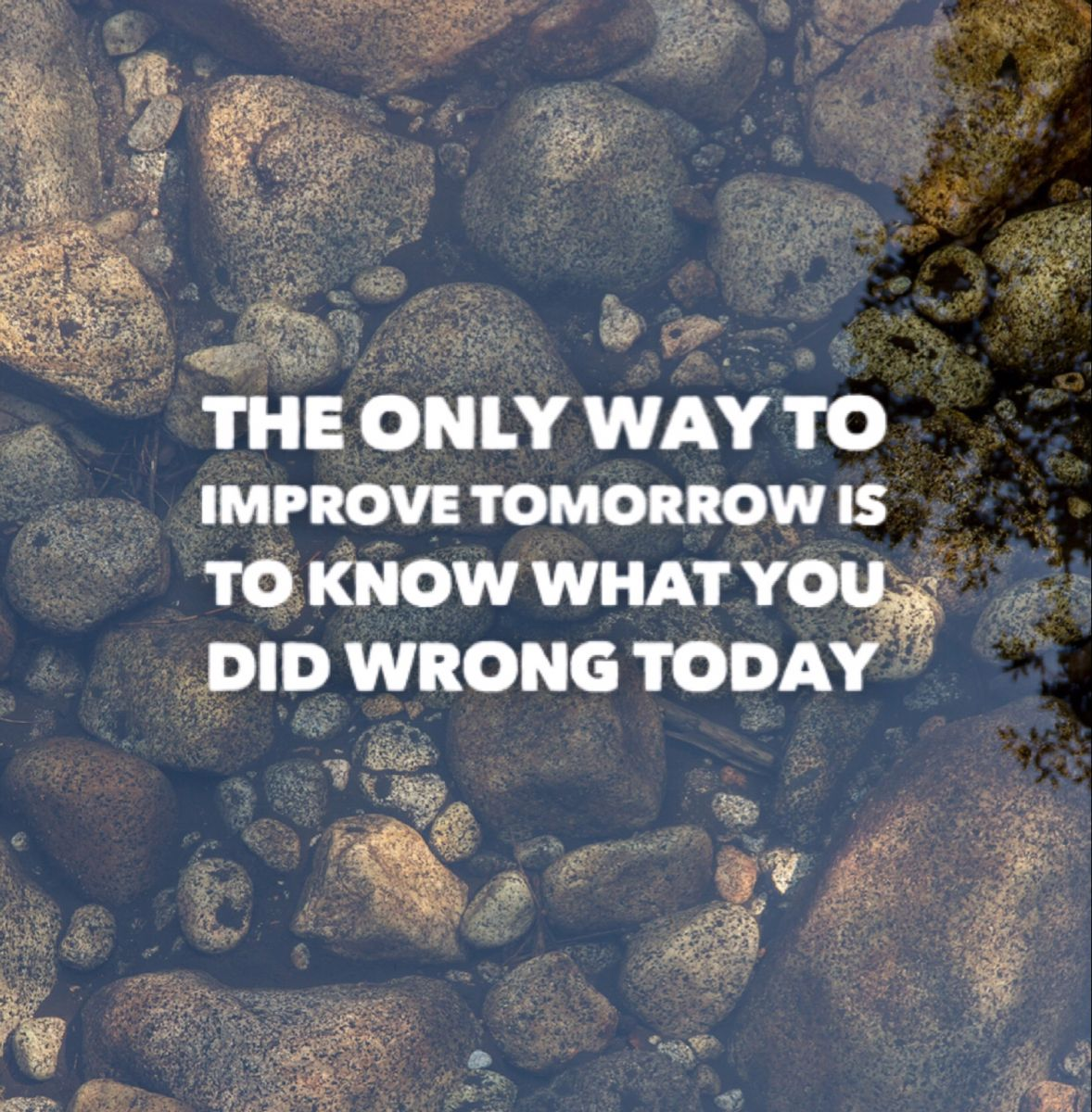 The only way to improve tomorrow is to know what you did wrong today. This quotes is from book the monk who sold his ferrari. For more Quotes from books do follow us and visit our website. #thoughts #tomorrow #today #positive #quoteoftheday #lifechangingbooks #booklovers #bookstoread #inspirationalquote #motivationalquotes #positivequote #deepquotes #shortquotes #quotesaboutlife #quotestoliveby