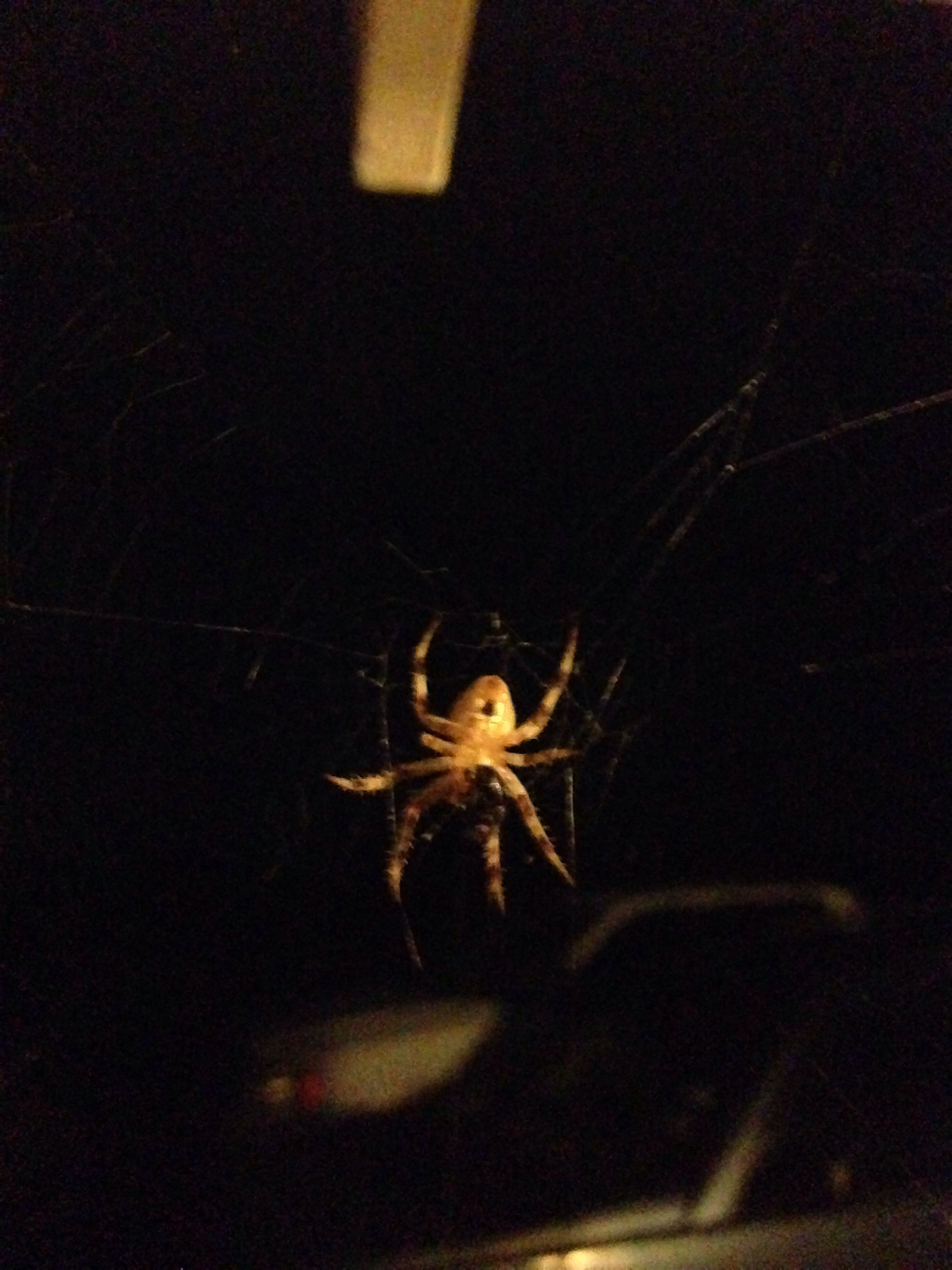 Pic I took of a spider