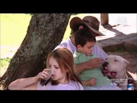 Dogs 101 The Dogo Argentino The Story Of How The Breed Came To