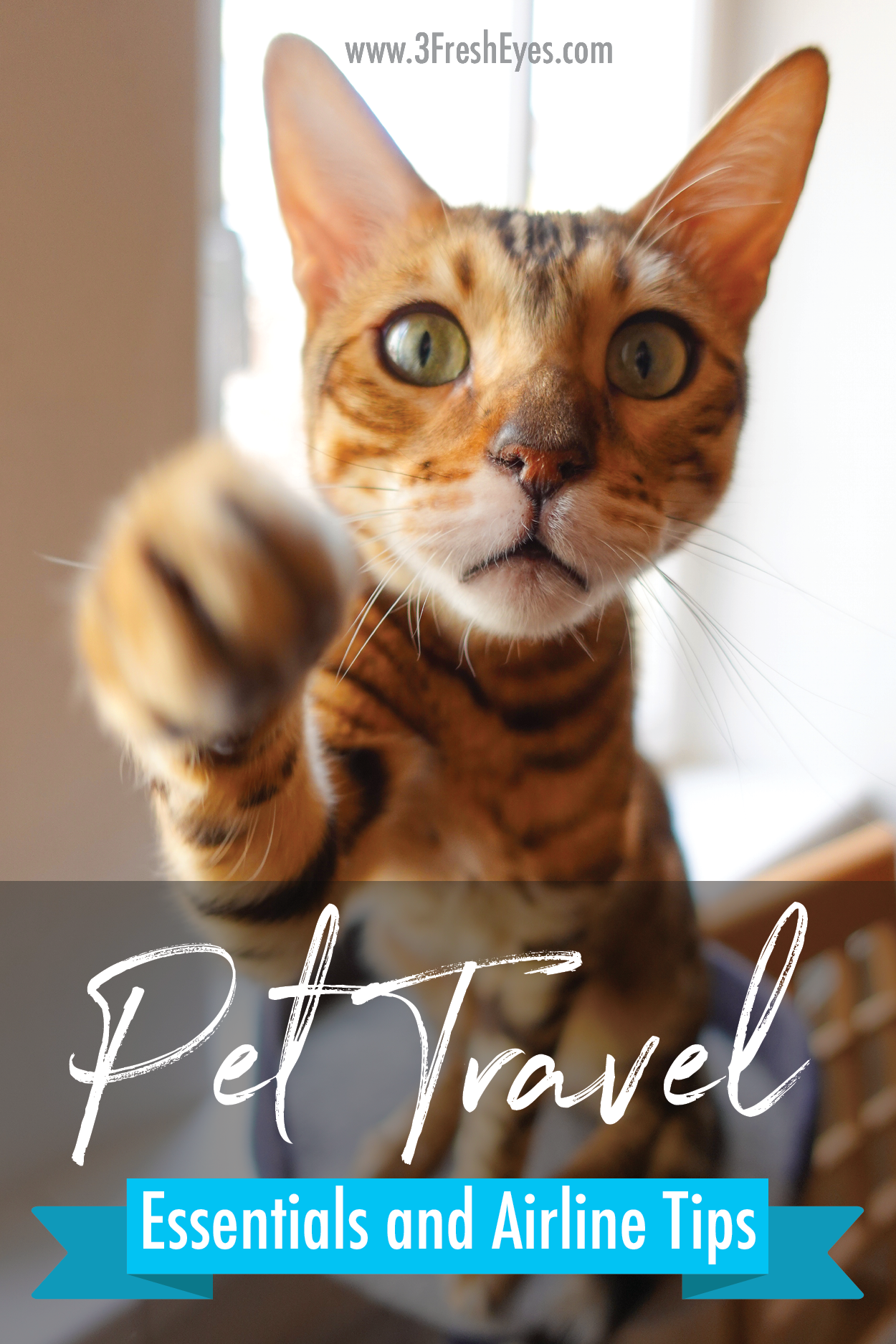 Pet Travel Essentials and Airplane Tips Pet travel, Cat