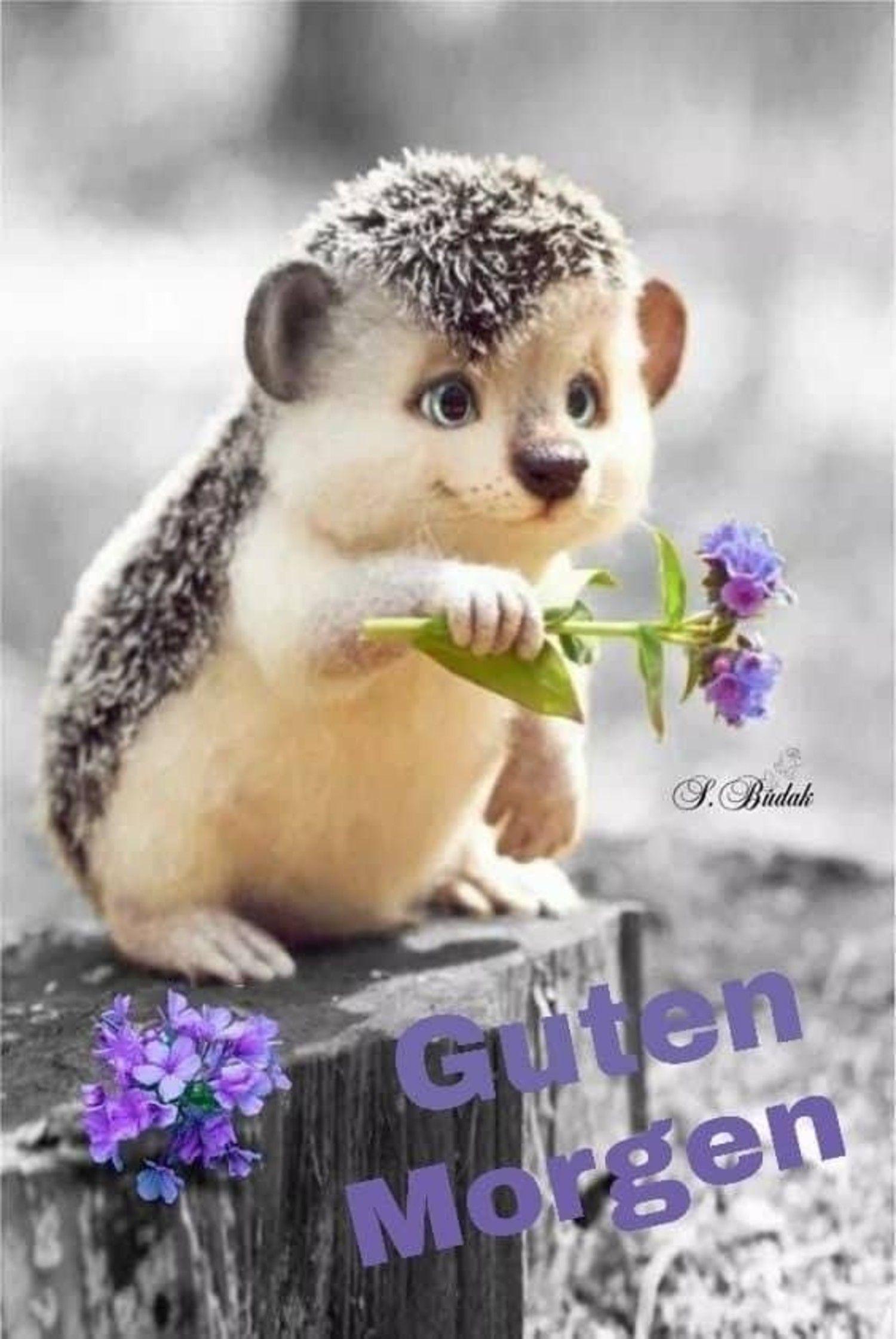Photo of Gästebücher Pics Guten Morgen 207 – GBPicsBilder.com
