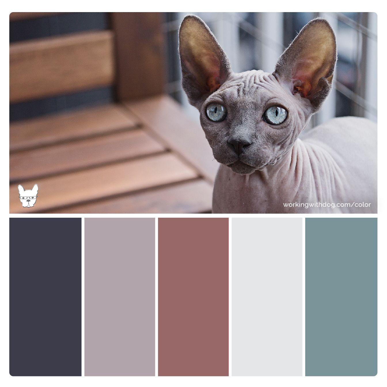 Color Palettes For Pet Brands Cool Color Palette Modern Color