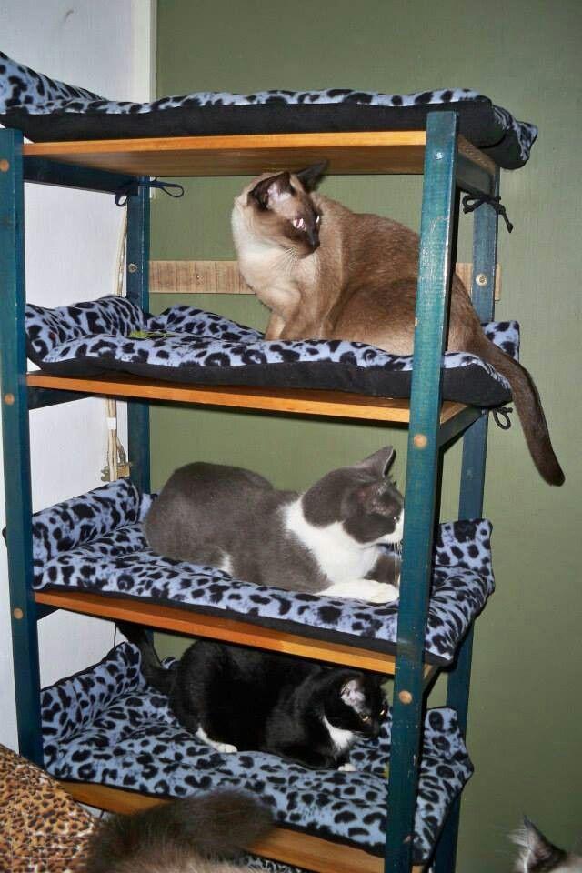 Cama para gatos gatos pinterest camas gato y mascotas - Cama para gato ...