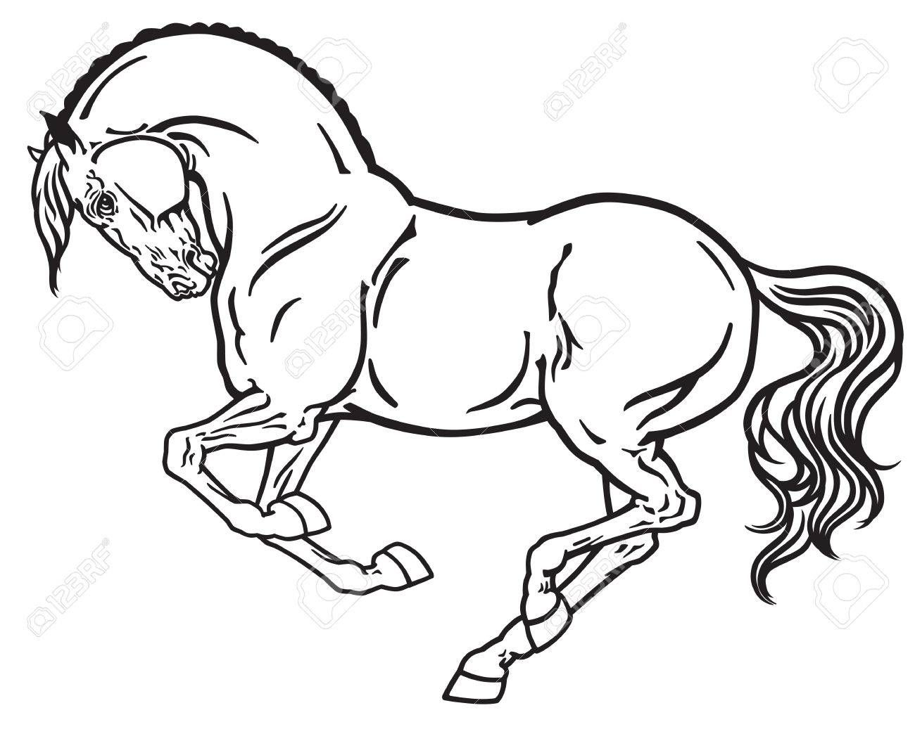 Horse Stallion In Gallop Side View Outline Black And White Vector Horse Coloring Pages Horse Outline Horses [ 1054 x 1300 Pixel ]