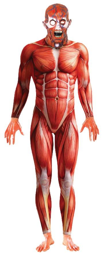Buy Anatomy Man Skin Suit Costume 21580 Halloween Costumes