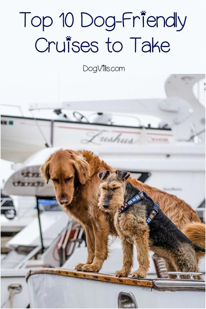 Wondering If There Are Any Dog Friendly Cruises Out There