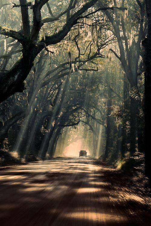 Mystic Journey by Michael Woloszynowicz Shot on Botany Bay Road in Edisto Island, South Carolina.