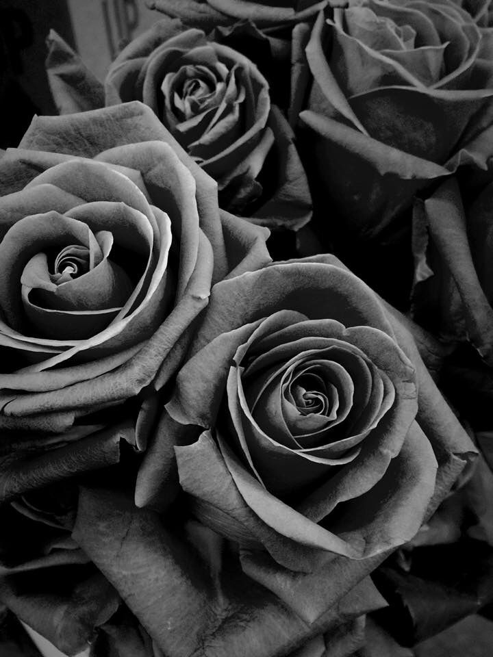 Roses greyscale Black and white roses, Grey hair, Gray