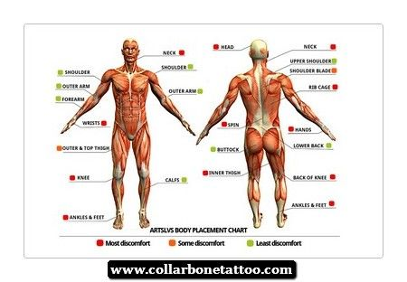 Parts of Human Body | Chiropractic Information. | Pinterest