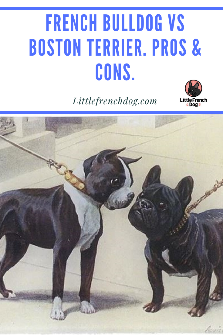 The Pros and Cons of The French Bulldog Temperament