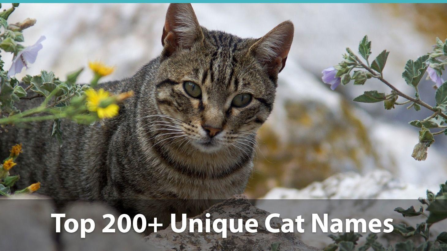 Top 200+ Unique Cat Names Puns, Funny Options, And More