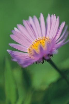 Pin On Gardening Care 2510