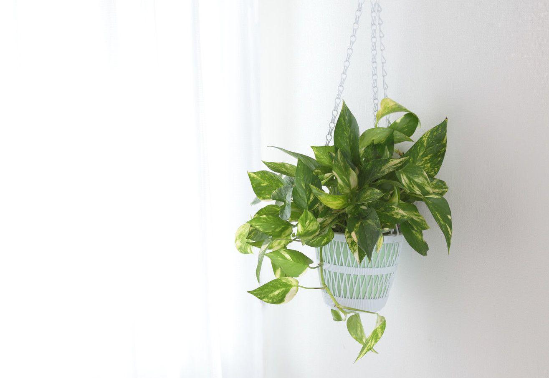 9 plantes qui résisteront même aux pires des jardiniers | pinterest