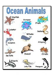 English worksheet: Ocean Animals | Ocean animals, Sea animals