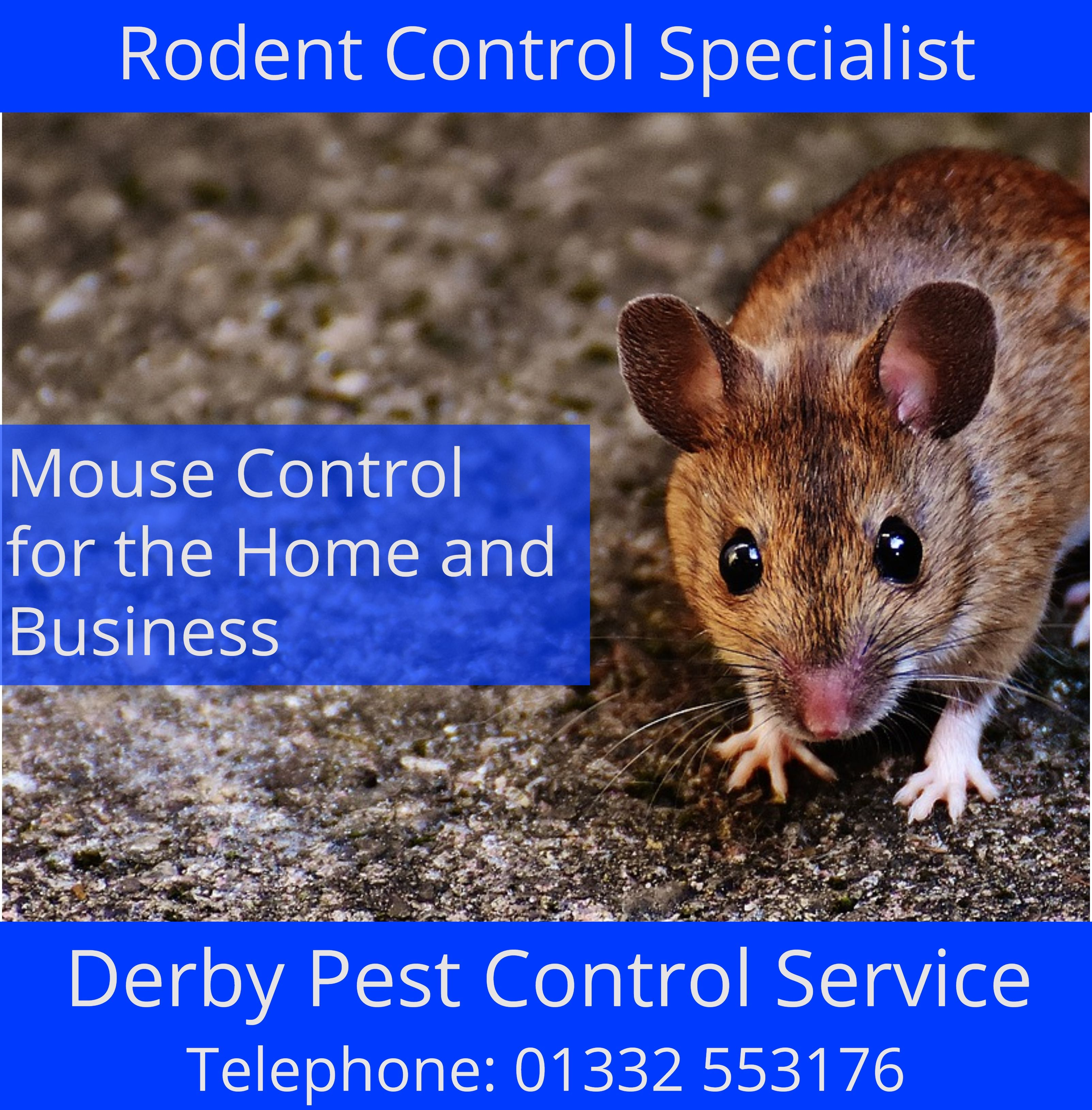 Find out how to resolve a mouse problem in your home or