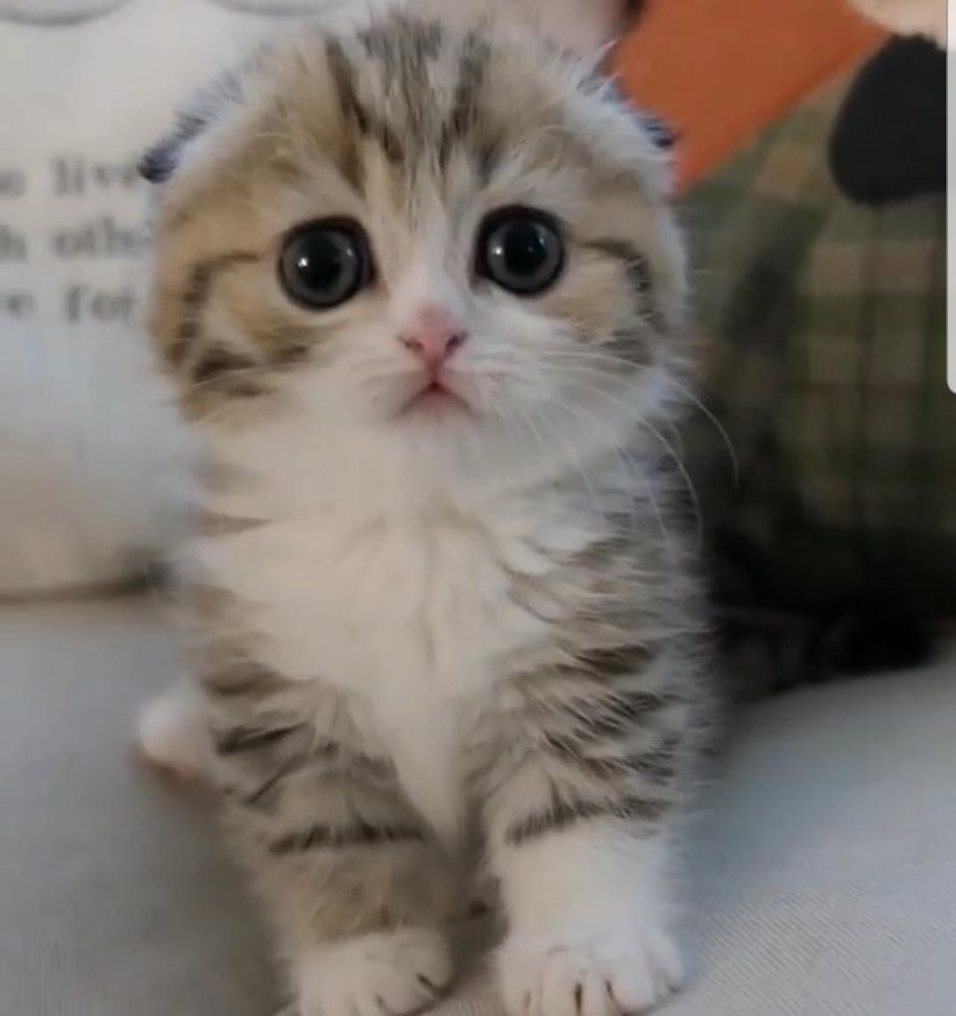 Kitten Mittenshttps I Redd It 0j3g54bhsyu11 Jpg Cute Baby Cats Kittens Cutest Cute Little Kittens