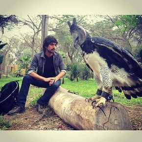 This is a Harpy Eagle. Yeah he looks pretty harpy. I wouldn't be too harpy if he got that close to me!!  via Sheila Sanchez