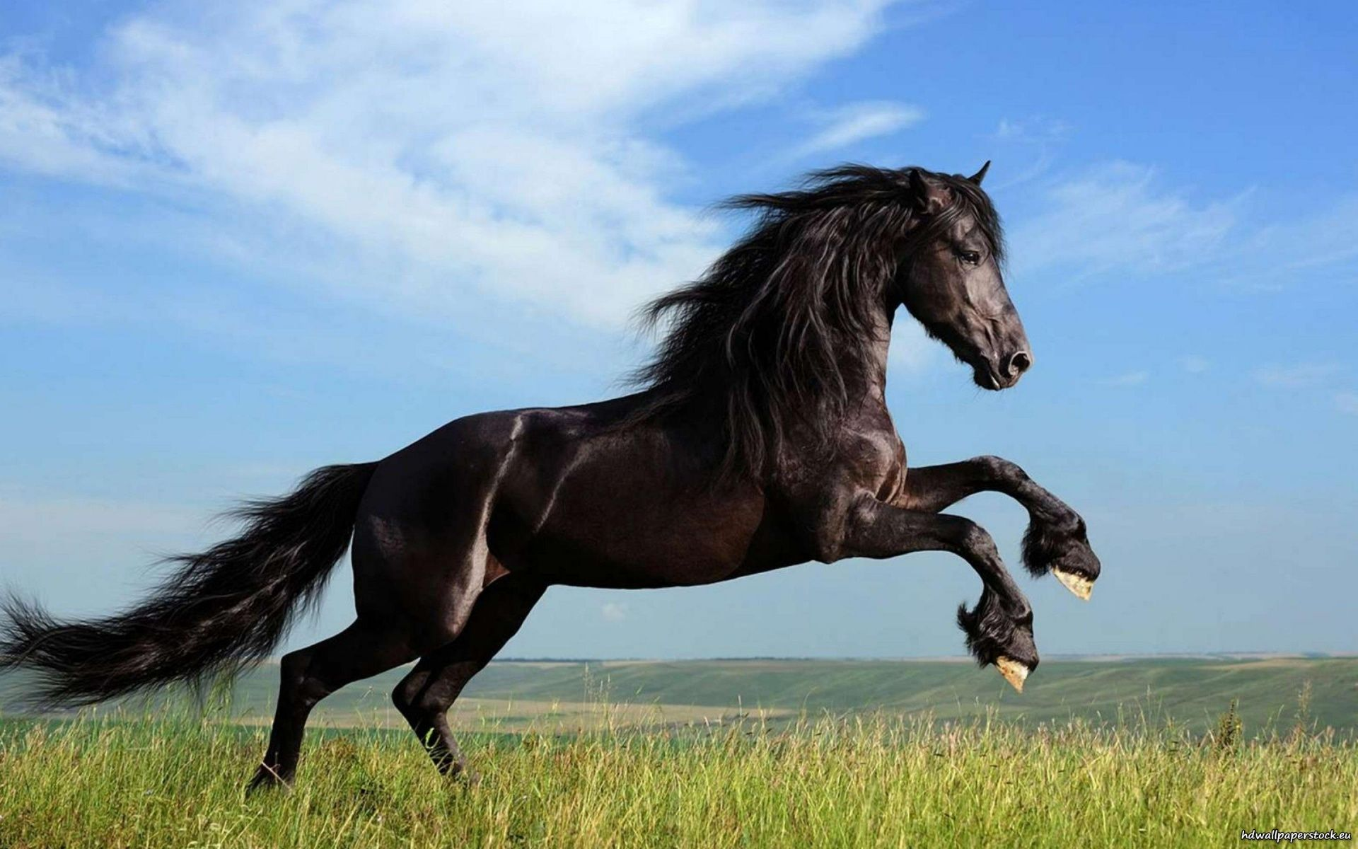 Horse Jumping Pictures High Quality A N Galleries High Resolution Saltwater Fishing Wallpaper Horses Stallion Horses Black Stallion Horse