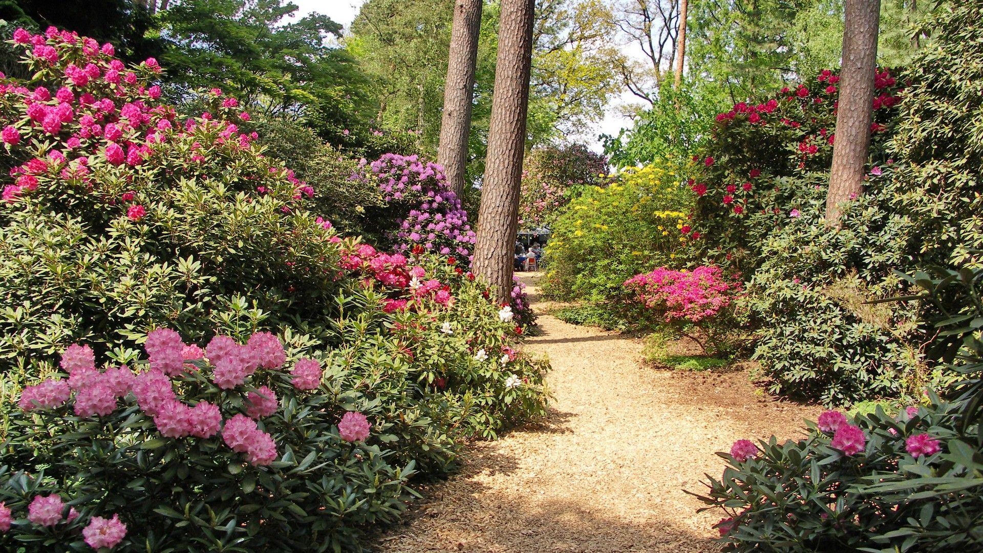 Rhododendren Im Hobbie Rhodopark In Linswege