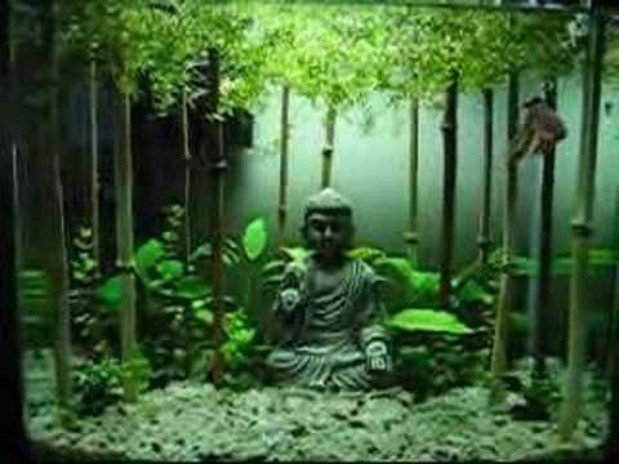 Aquarium fish tank setup - My Planted Betta Tank Setup And Betta Fish Buddha And Betta Peace And