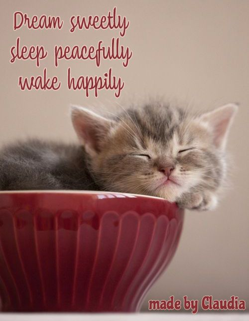 Pin By Camille On Sec Min Stunden Tage Monate Sleeping Kitten Pretty Cats Kittens Cutest