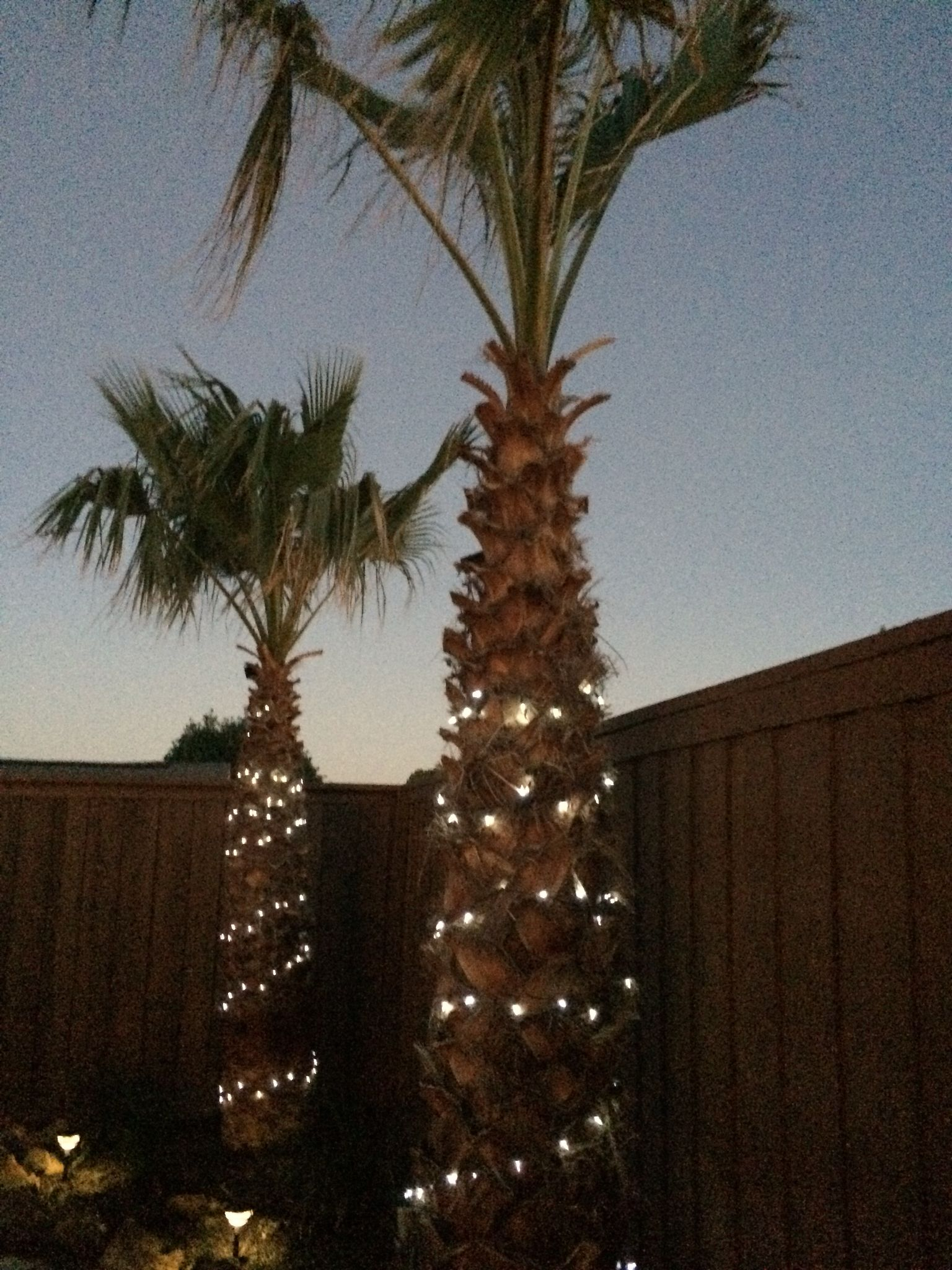 You can see when 200 strands are put on these trees they will look so much better.
