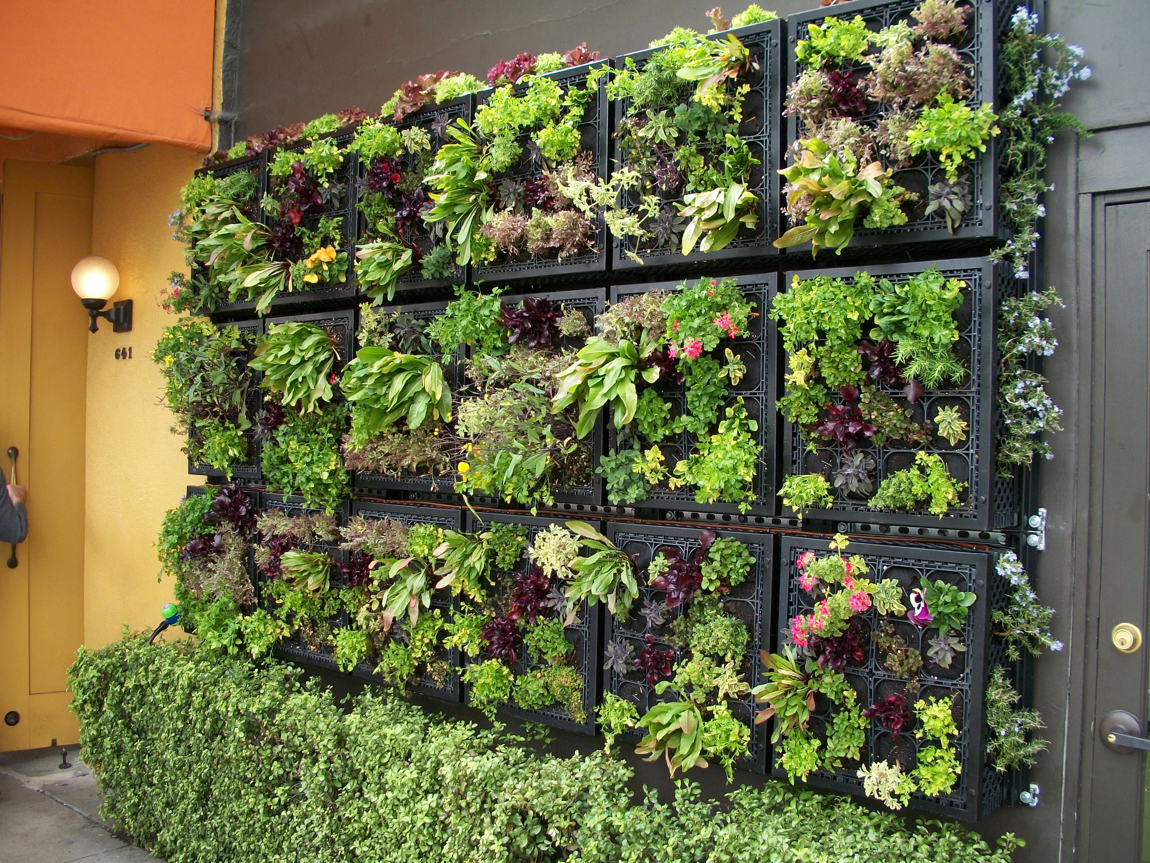 Vertical Vegetable Garden Design - Plastic crate green wall