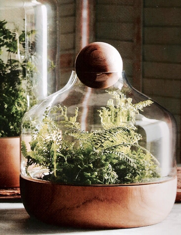 A Terrarium Is A Collection Of Small Plants Growing In A Transparent