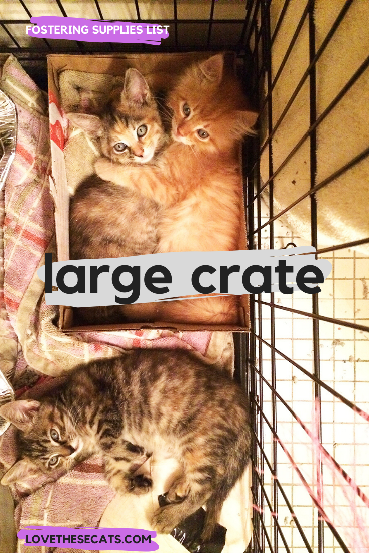 I Know It S A Dog Crate But It S Great For Foster Kittens Too Cat Crate Foster Kittens Foster Cat