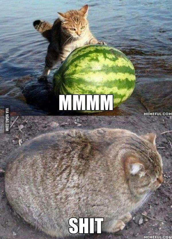 Why Cats Don't Eat Watermelon... Funny cat pictures