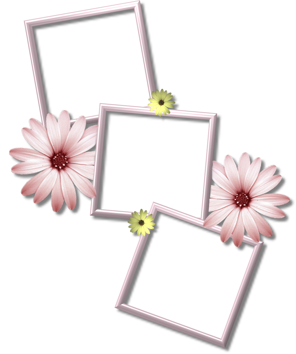 frame png | Daisy MultiFrame | SYEDIMRAN (With images ...