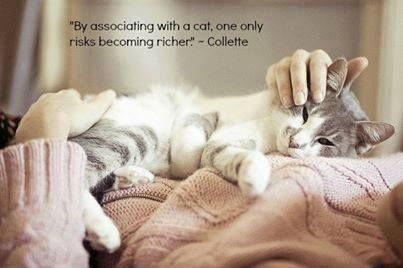 """""""By associating with the cat one only risks becoming richer""""  Colette"""