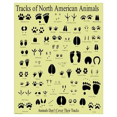 Books and this chart to id animal tracks in the snow from doodles jots also rh pinterest