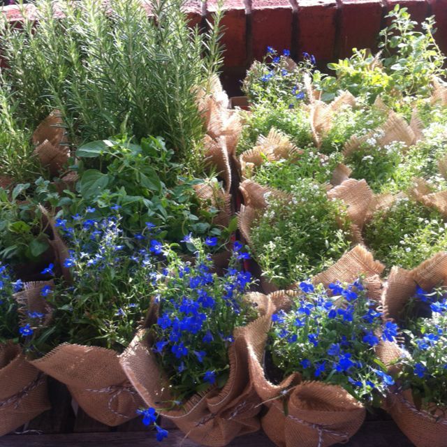 Herbs and potted colour in hessian and twine