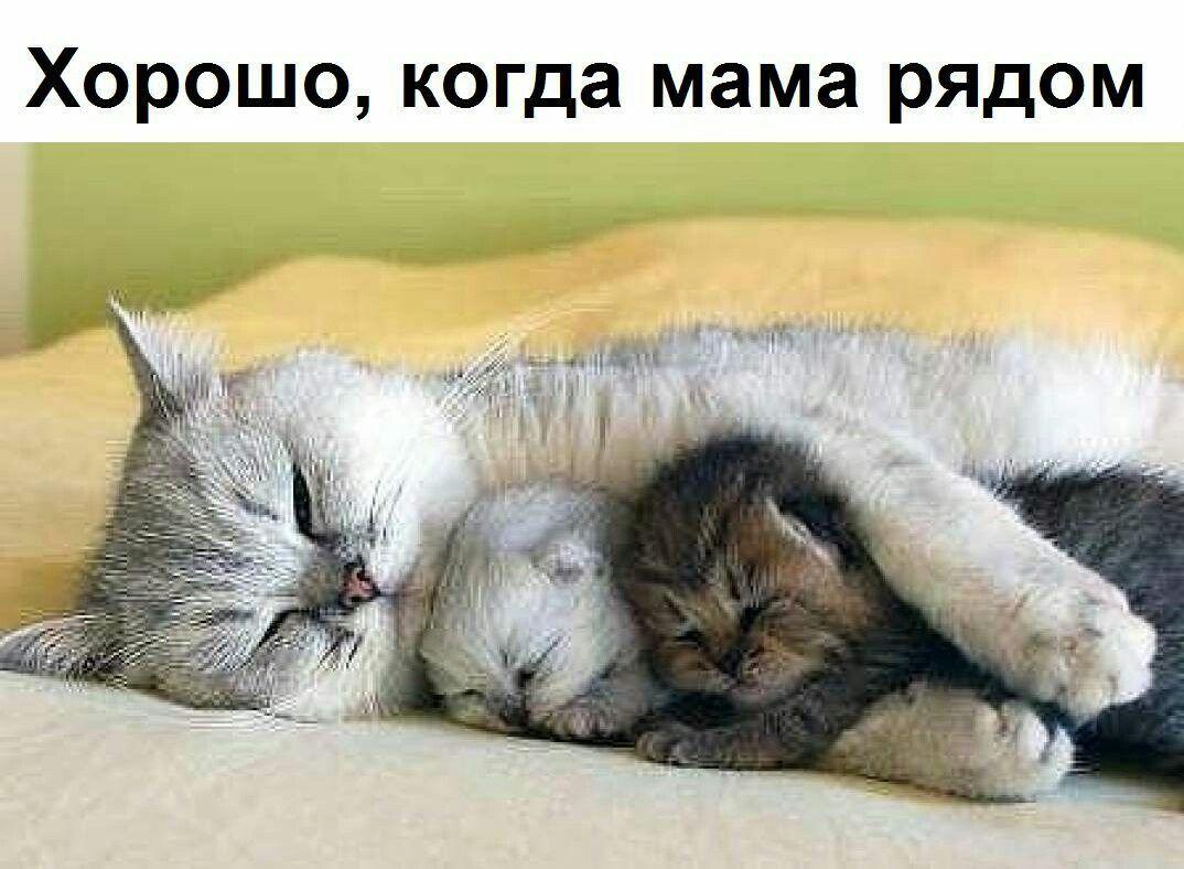 Mommy Loves You Cat Kitty Kitten