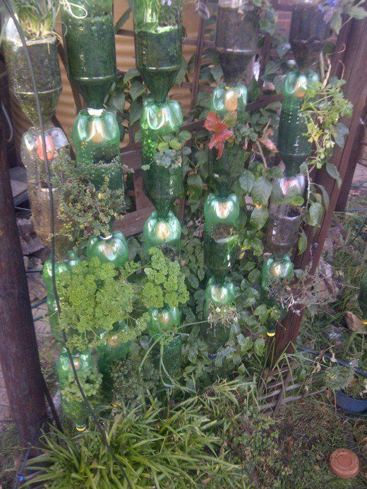 Herbs Flourish In The Hanging Plastic Bottle Garden This Photo Was Taken Second Season Of Growing