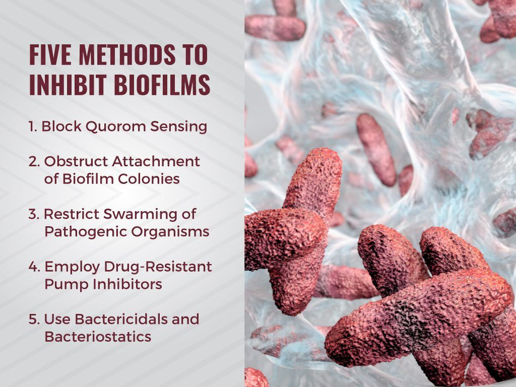 Image Result For Candida Biofilms Stool The Toilet
