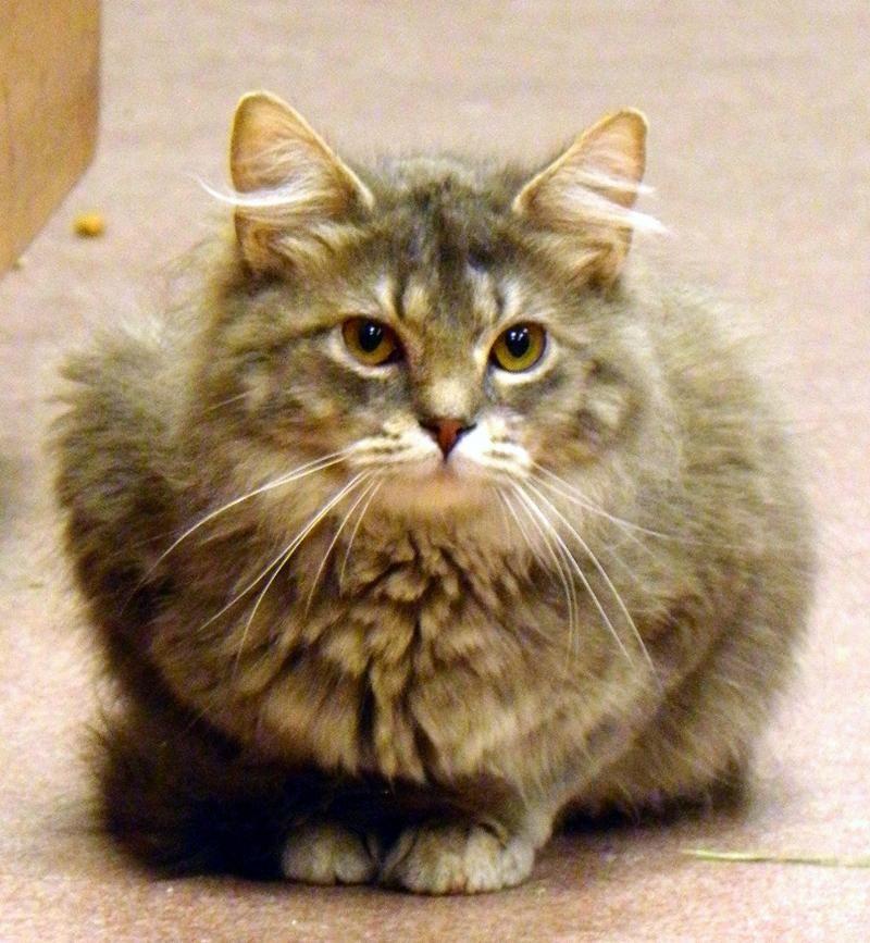Adopt Arabella **50 SUMMER SPECIAL!** on Cats, Summer