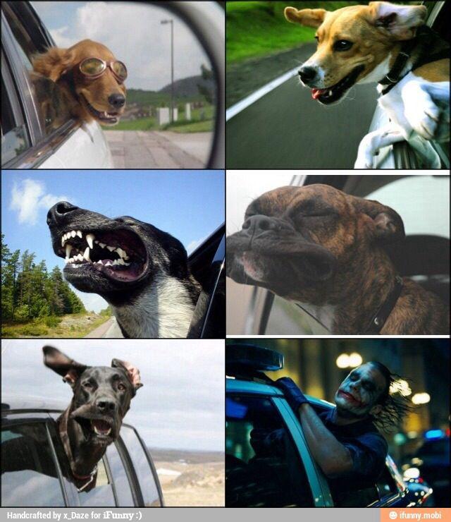 Dogs… we all love them! Bahahahahahaha!!!