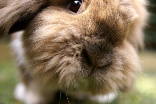 Is that AN APPLE I smell!?! With a hint of cilantro?  From Bunny Relationships on FaceBook