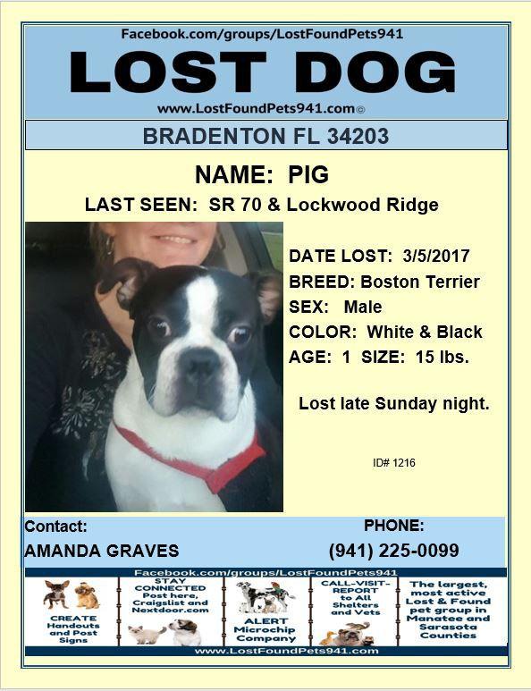 Pig Is Lost Please Rt Lostdogs Lost Bostonterrier Bradenton Fl Losing A Pet Losing A Dog Dogs