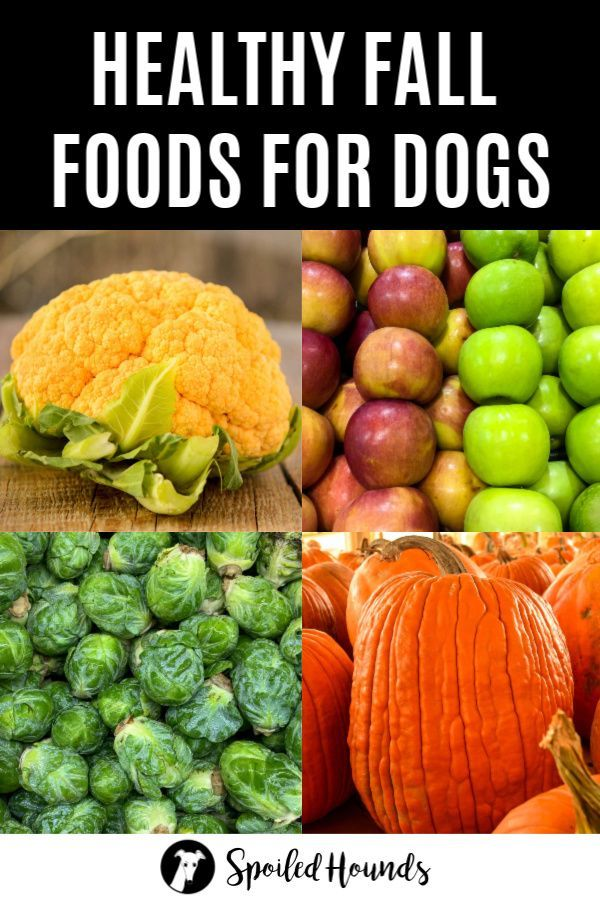 Healthy Fall Foods for Dogs Fall recipes healthy, Dog