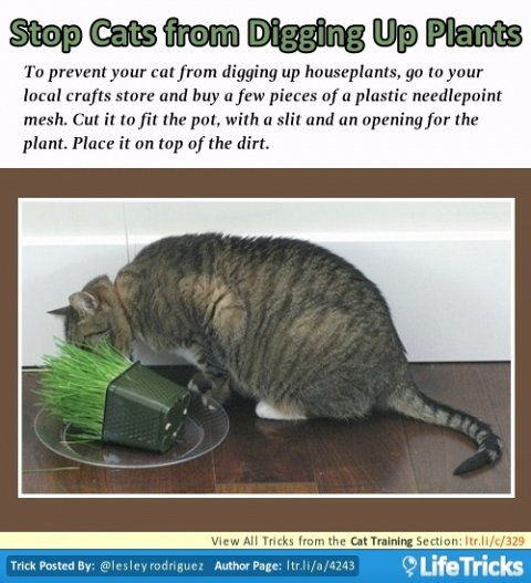 how to stop cats from digging in houseplants
