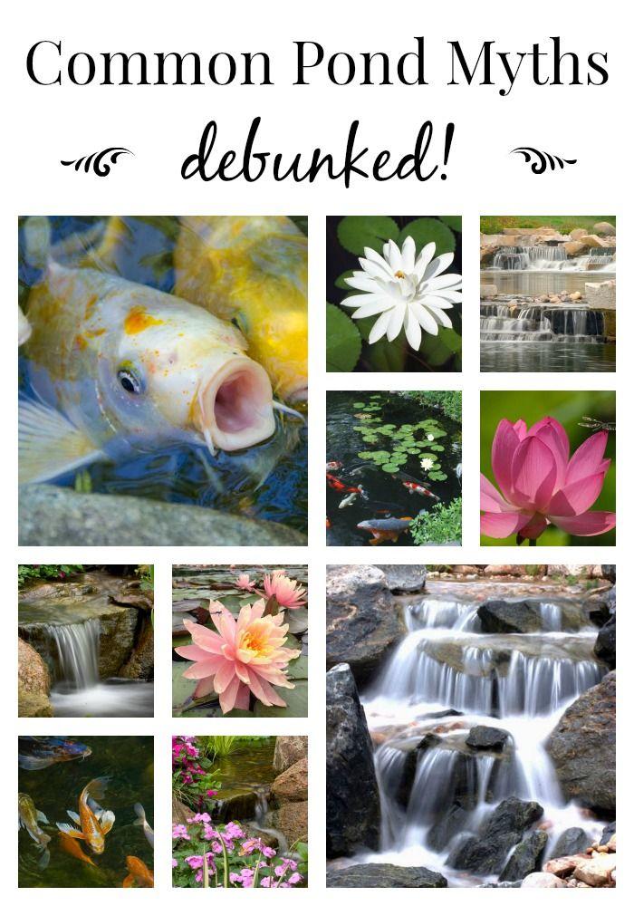 Pond Myths Ponds Ponds Backyard Goldfish Pond Small