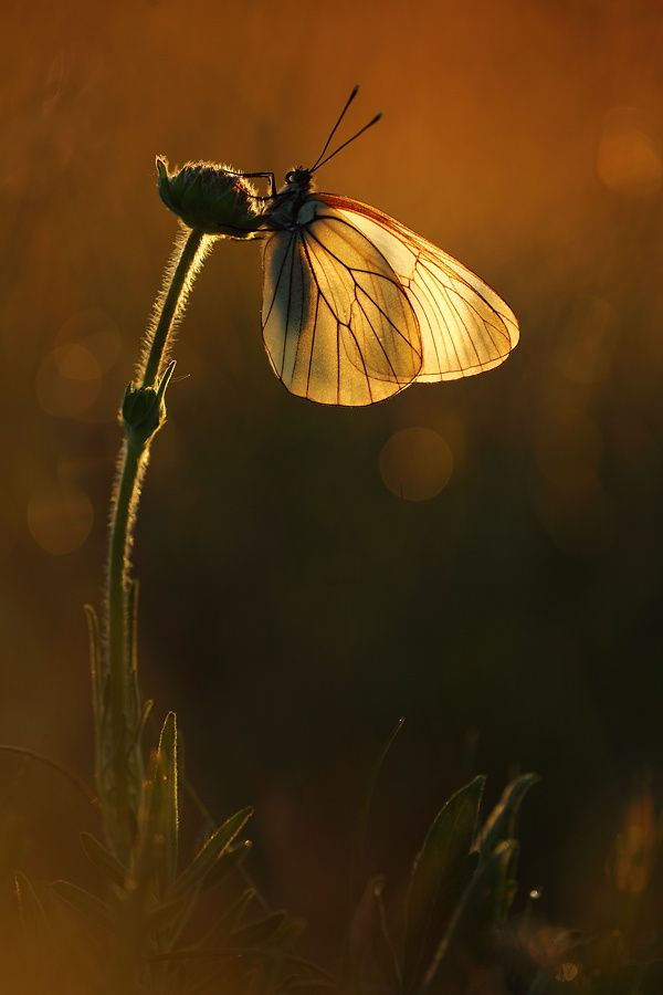 Butterfly by Christian Rey on 500px