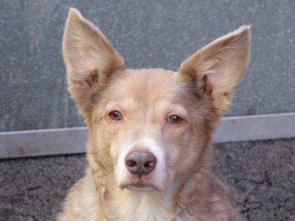 Keys 33875 Nyc Dogs Pets Dog Adoption