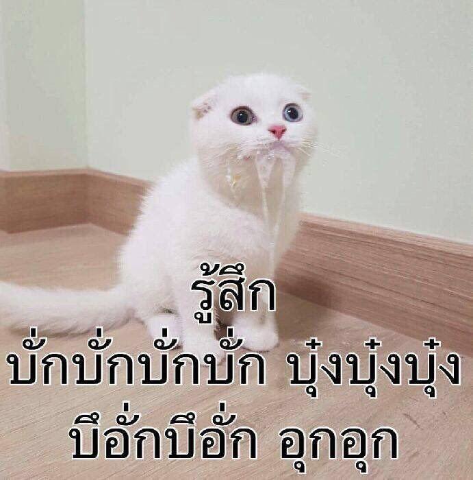 ป กพ นโดย Sai Jeeranun ใน Reaction ร ปแมวขำๆ ภาพตลก ร ปตลก