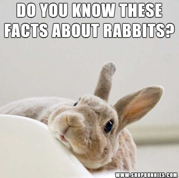 Do You Know These Facts About Rabbits With Images Rabbit Breeds Pet Rabbit Toys Rabbit